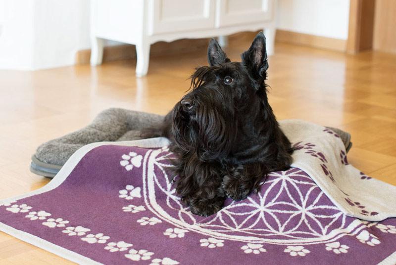 Ein schwarzer Hund liegt in einem Körbchen, das mit einer lila Decke bedeckt ist. Auf der Decke sind in weiß die Blume des Lebens und ein Muster aus Pfotenabdrücken abgebildet.
