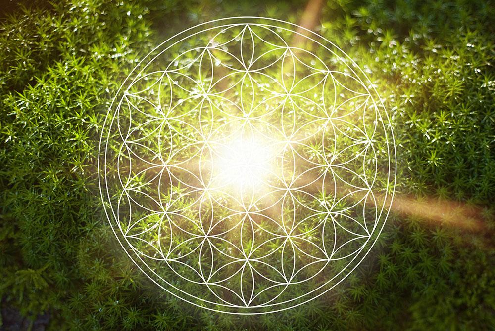 Leuchtendes Symbol der Blume des Lebens vor einem Hintergrund aus grünen Blättern